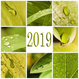 2019, green leaves and raindrops photo collage - 230590430
