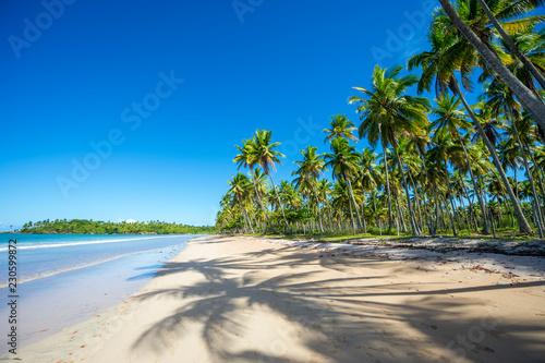 Bright scenic view of empty tropical beach with shadows of palm trees on wide shore in Bahia, Brazil