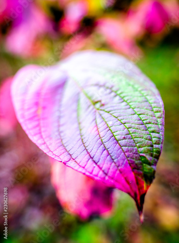 leaves - 230627698