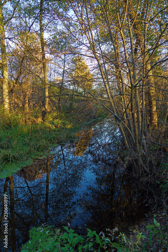 River in the forest in late summer or early autumn with lots of plants