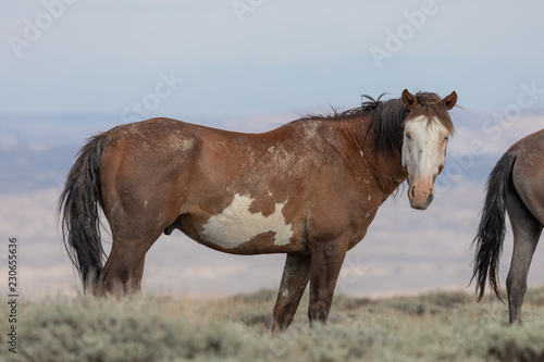 Majestic Wild Horse in the High desert