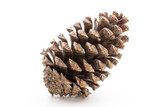 Christmas pine cone on white background. - 230657899