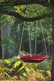 Swing hangs on tree in autumn forest. - 230666223