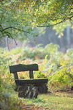 Wooden bench in autumn forest with ferns. - 230666241