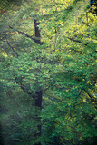 Leaves of trees in autumn forest. - 230666251