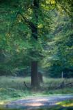 Pathway in misty autumn forest. - 230666255