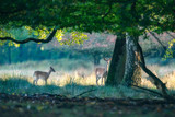 Two deer under tree in forest. - 230666284