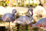 su içindeki flamingolar