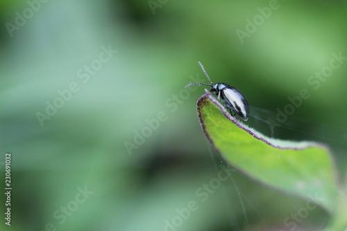 Foto Murales insetto macro sopra una fogliolina