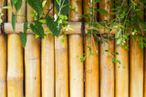 design bamboo background