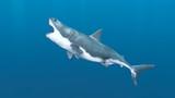 サメ - 230717052