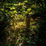 Dark but sunlit glade in Lindfield West Sussex - 230720430