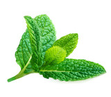 Fresh mint leaves isolated on white background. Raw Mint, peppermint close up - 230759427