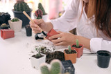 Woman doing a hobby garden Agriculture propagate and reproducing cactus on pot. - 230765607