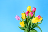 bouquet of yellow and pink tulips on a blue background