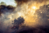 Forest fire, nature disaster - 230773672