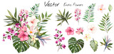 Tropical vector flowers. card with floral illustration. Bouquet of flowers with exotic Leaf isolated on white background. composition for invitation to party or holiday - 230775808