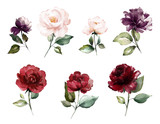 watercolor burgundy flowers. floral illustration, Leaf and buds. Botanic composition for wedding, greeting card.  branch of flowers - abstraction roses - 230777049
