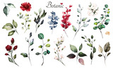 Set watercolor elements - wildflowers, herbs, leaf. collection garden and wild, forest herb, flowers, branches.  illustration isolated on white background,  leaf. Botanic - 230777434