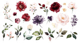 Set watercolor elements of roses collection garden red, burgundy flowers, leaves, branches, Botanic  illustration isolated on white background.  bud of flowers - 230777888
