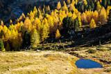stagno in ambiente alpino autunnale - 230784031