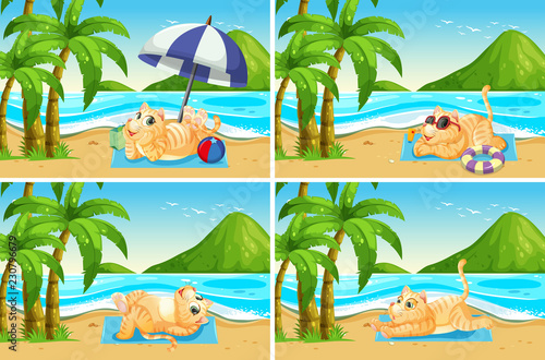 Set of cat at the beach - 230796679