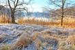 Leinwanddruck Bild - Seeufer mit Schilf bei erstem Frost