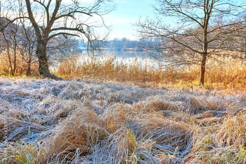 Leinwanddruck Bild Seeufer mit Schilf bei erstem Frost