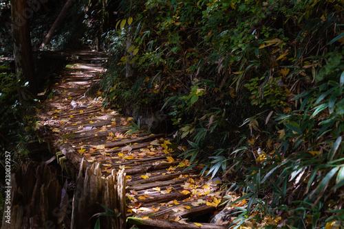 山 / 自然 / 森 / 登山 / 山道のイメージ