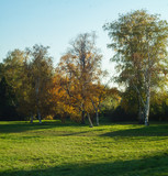 Green grass in the meadow and autumn trees on a sunny day - 230829804