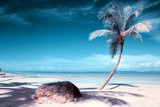 Palm tree on white tropical beach. Travel background. - 230843811
