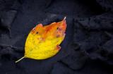 autumn leaf on dark soil - 230843834