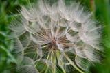 flowers in the garden - 230848081