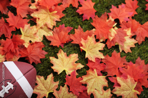 American football next to some autumn fallen maple leaves (focus on the ball) - 230865299