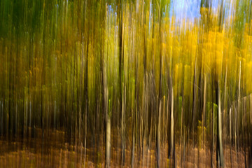 Blurred trees in the forest. Abstract background