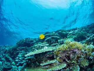 Ägypten Underwater World