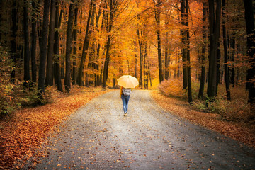 Woman with umbrella walks into the magical colorful autumn season forest.  © robsonphoto