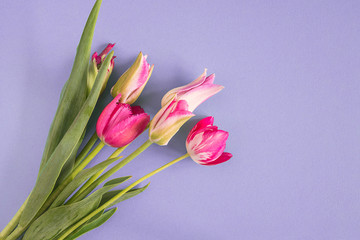 Bouquet of fresh pink and purple tulips