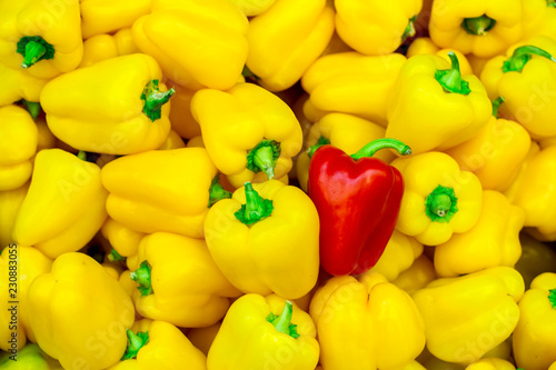 lots of yellow peppers and one red pepper - 230883055