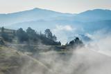 Trees in morning fog in Pieniny, Slovakia