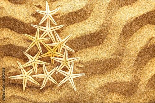 Fir tree made of sea shells on