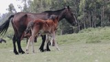 Mare and foal horses on ranch - 230910083