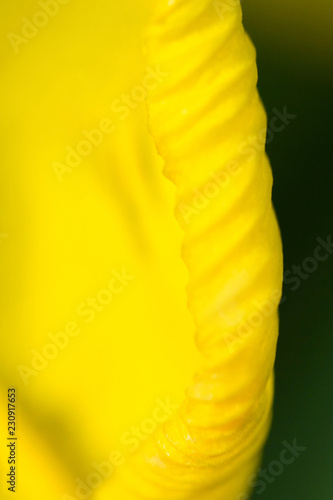 yellow leaf flower closeup with blur - 230917653