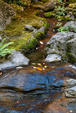 Tranquil stream with mossy rocks, green fern, and fall leaves