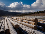 harvested pine logs covered with a thin layer of snow lie on the forest glade against the blue sky mountains and clouds - 230944691