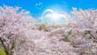 満開の桜とハートのしゃぼん玉
