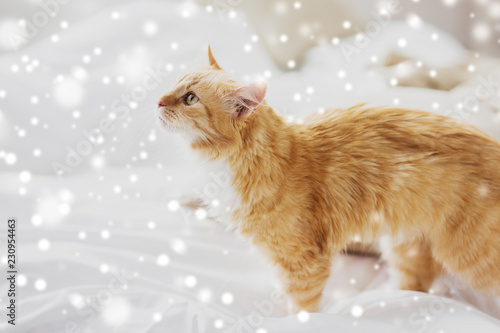 pets, winter and hygge concept - red tabby cat at home in bed over snow - 230954463