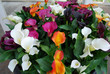 Bouquet of multicolor callas (orange, purple, white, red, yellow). Spring time in  Netherlands.