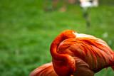 flamingo, bird, pink, nature, animal, water, zoo, wildlife, birds, red, flamingos, beak, feather, wild, tropical, feathers, beautiful, flock, exotic, white, neck, group, lake, beauty, pond