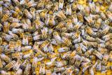 Close up Honey Bees